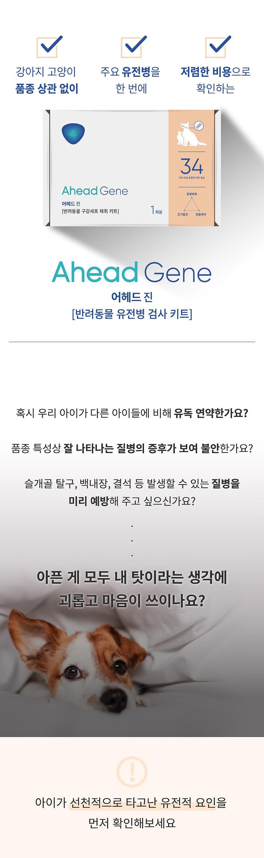 [특별세트] 어헤드진+어헤드-상품이미지-1